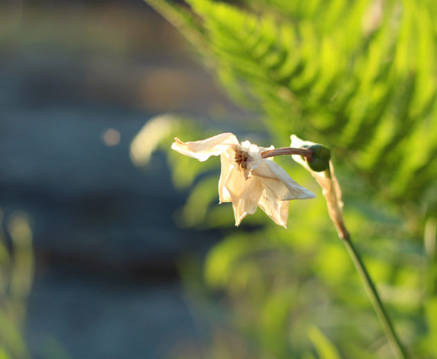 vissen blomma
